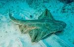Акулы — сообщение доклад