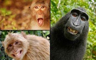 Хоботные животные — сообщение доклад (отряд хоботные млекопитающие)