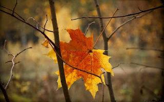 Сочинение октябрь уж наступил 5, 7 класс
