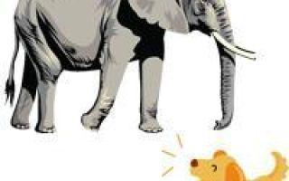Слон и моська — краткое содержание басни крылова