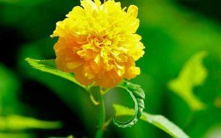 Анализ стихотворения тебе одной плету венок есенина
