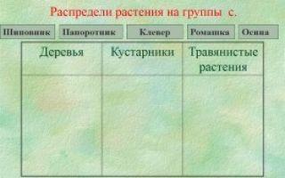 Жизнь леса — сообщение доклад (2, 4 класс окружающий мир)