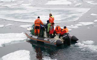Арктика — сообщение доклад (4, 5, 7, 8 класс окружающий мир)