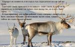 Доклад на тему животные тундры (4 класс окружающий мир сообщение)