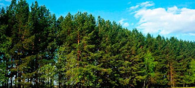 Экологические проблемы — сообщение доклад (4, 9 класс. окружающий мир)