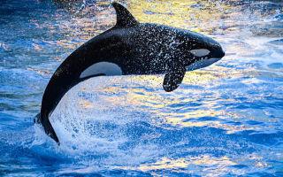 Синий кит — сообщение доклад