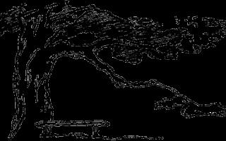 Ранний восход — краткое содержание рассказа кассиля