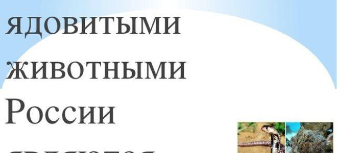 Ядовитые животные россии — доклад сообщение (4 класс окружающий мир)