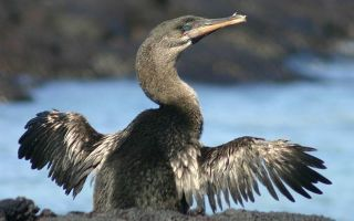 Доклад на тему нелетающие птицы сообщение