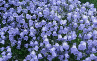 Цветы — доклад сообщение