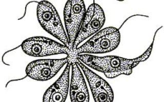 Сообщение водоросли в жизни человека (7 класс доклад)