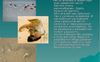 Каспийское море — доклад сообщение (4, 8 класс. география. окружающий мир)