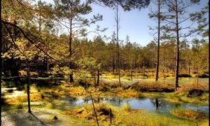 Анализ стихотворения топи да болота есенина 7 класс
