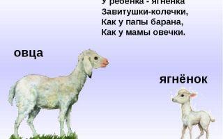 Животные и их детеныши — соощение доклад (3 класс окружающий мир)