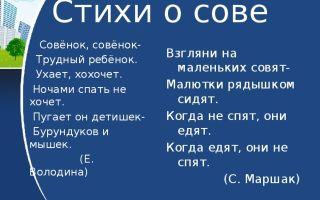 Совы — сообщение доклад (2, 7 класс)