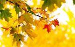 Анализ стихотворения бунина осень. чащи леса