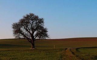 Трёхгрошовая опера — краткое содержание рассказа брехта