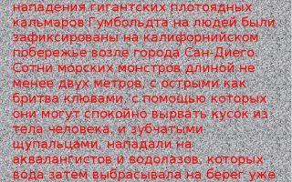 Кальмар — сообщение доклад (3, 7 класс, окружающий мир, биология)