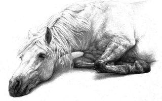 Хорошее отношение к лошадям — краткое содержание стиха маяковского