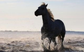 Конь с розовой гривой — краткое содержание рассказа астафьева