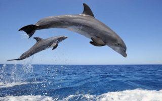 Животные океана — сообщение доклад