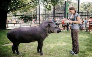 Московский зоопарк — сообщение доклад