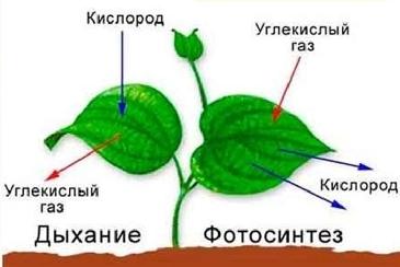 Какое значение имеет воздух для растений, животных, человека?