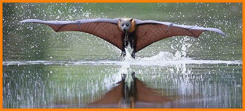 Летучие мыши - доклад сообщение