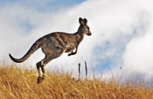 Природа, растения и животные Австралии