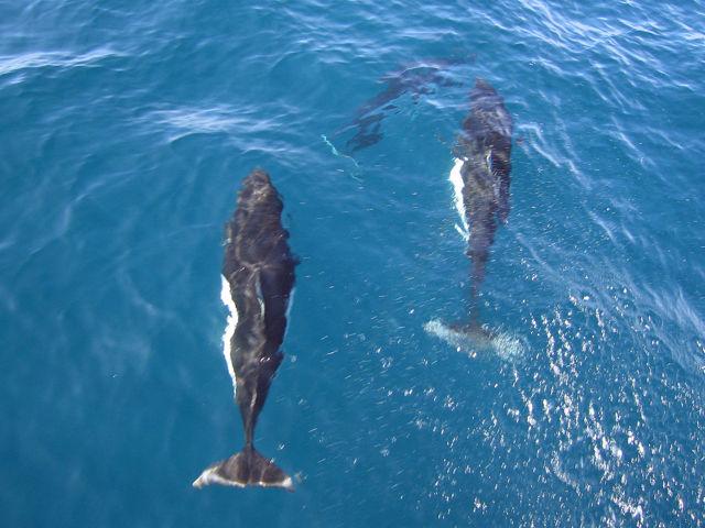 Сообщение о морском животном (Морской еж, Калифорнийская морская свинья)