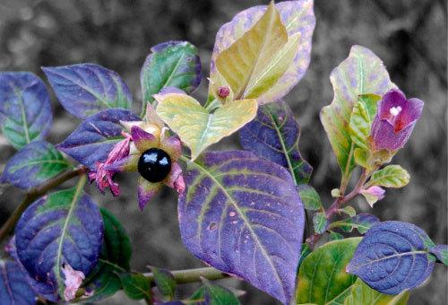 Доклад на тему Растения сообщение 2, 3, 5 класс Окружающий мир, биология