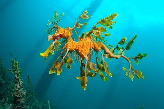 Морской конек - сообщение доклад