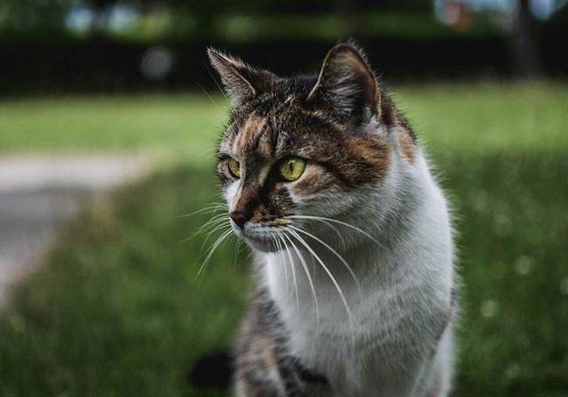 Кот и лодыри - краткое содержание произведения Маршака