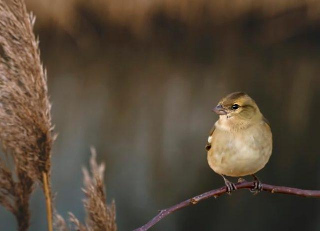 Королёк - птичка певчая - краткое содержание романа Гюнтекина