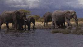 Охрана африканских слонов - сообщение доклад