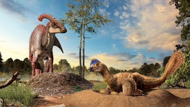 Доклад на тему Динозавры
