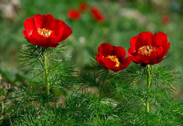Растения красной книги - сообщение доклад
