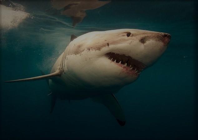 Акулы - сообщение доклад
