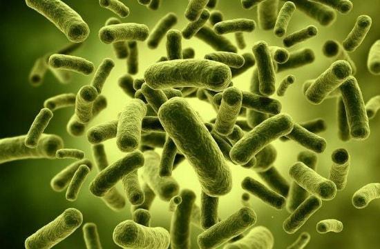 Какую пользу и вред приносят бактерии человеку 3 класс