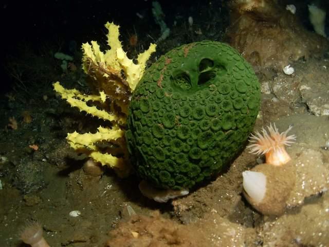 Морские обитатели - сообщение доклад