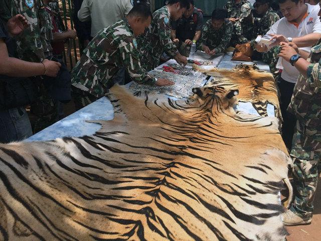Доклад про Амурского тигра (из Красной книги)