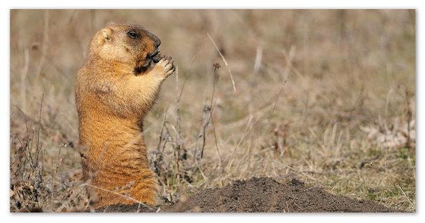 Животные степи - сообщение доклад