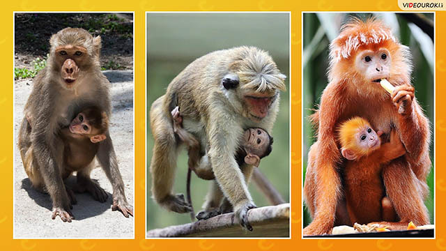 Животные и их детеныши - соощение доклад (3 класс окружающий мир)