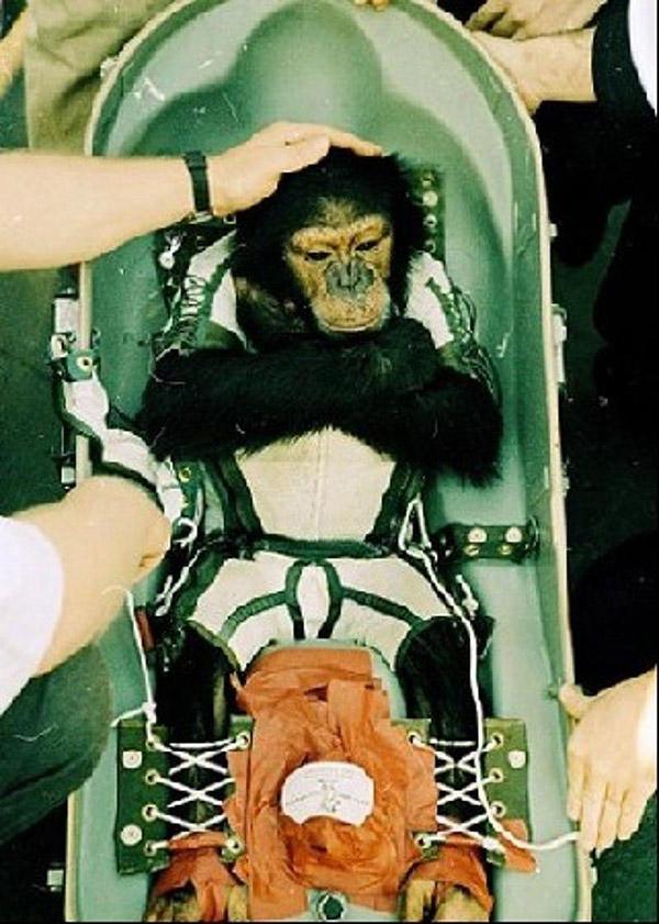 Какое первое животное запустила франция в космос?