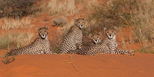 Животные пустыни - доклад
