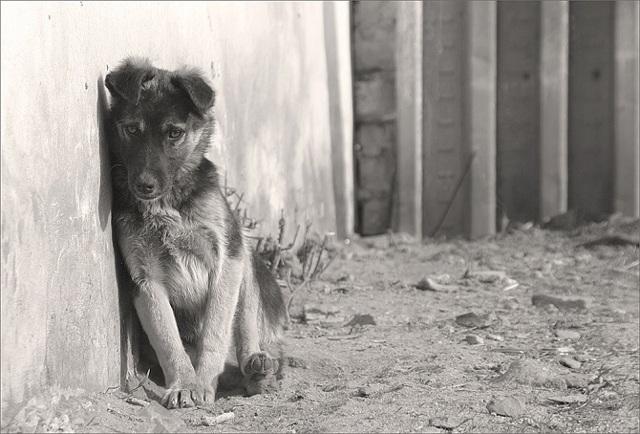Анализ стихотворения Песнь о собаке Есенин 6 класс