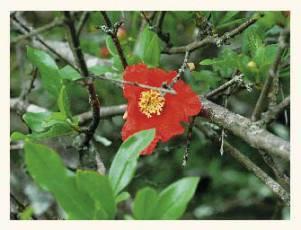 Растения Краснодарского края - доклад-сообщение