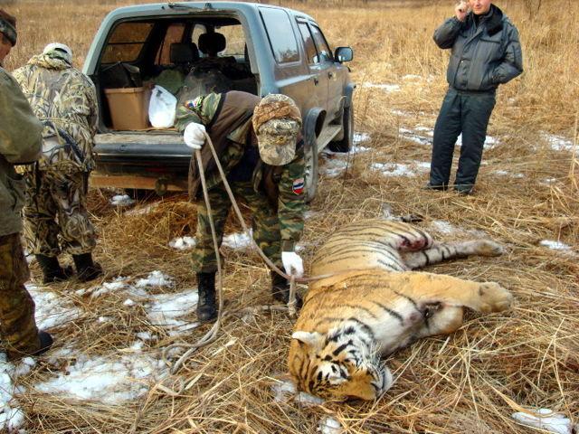 Исчезающие животные - сообщение доклад
