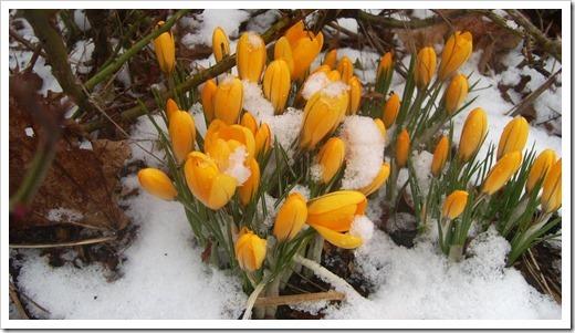 Как природа преображается весной с планом (доклад сообщение)