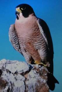 Кто такой орнитолог и что изучает?